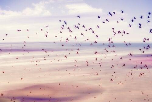 suuri parvi lintuja taivaalla