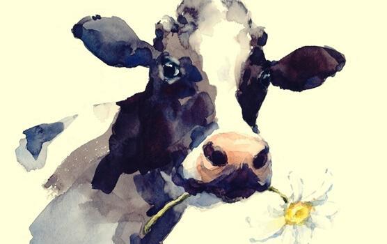 Tarina lehmästä: kun rutiinit rajoittavat meitä