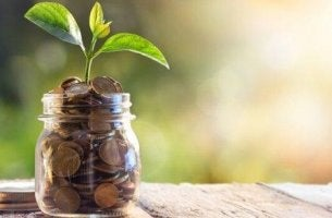 rahapurkissa kasvaa kasvi
