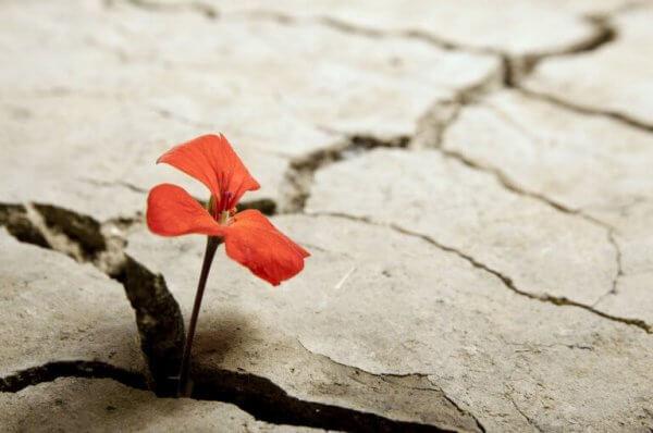 optimistiset ihmiset ovat kuin kukkia jotka kasvavat kuivalla maalla