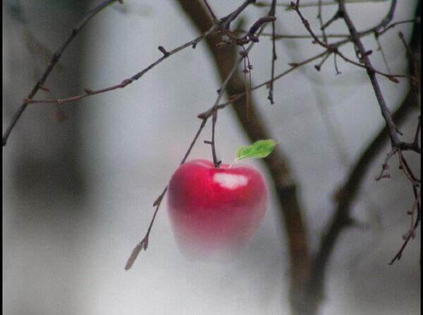 sairaalloinen viehätys: kielletty omena