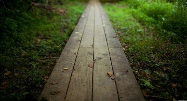 lankkupolku metsässä