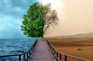 sillan kaksi erilaista puolta