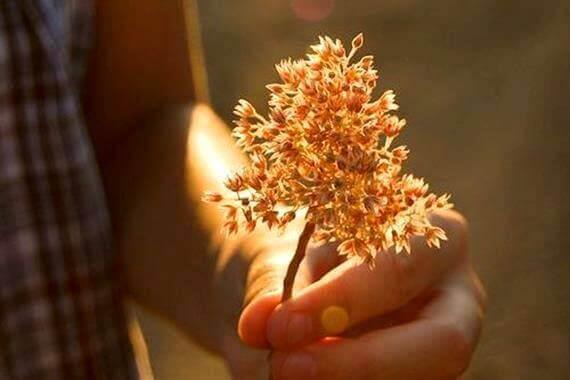 kasvi kädessä