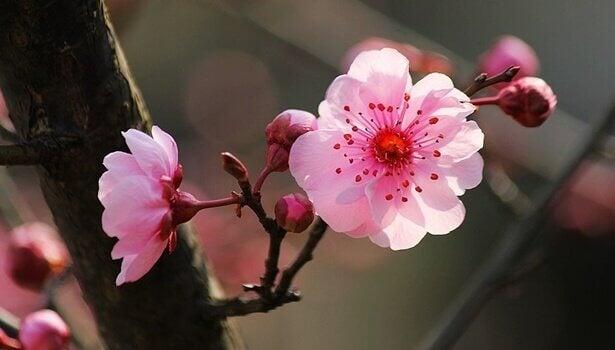 Japanilaisen psykologian 5 avainta