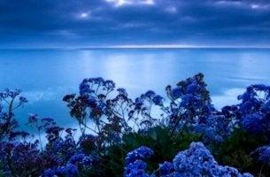 sininen väri meressä ja luonnossa