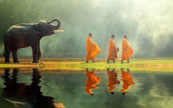 buddhalaiset munkit ja norsu