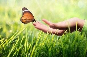 kinesteettinen kommunikointi perhosen ja ihmisen välillä