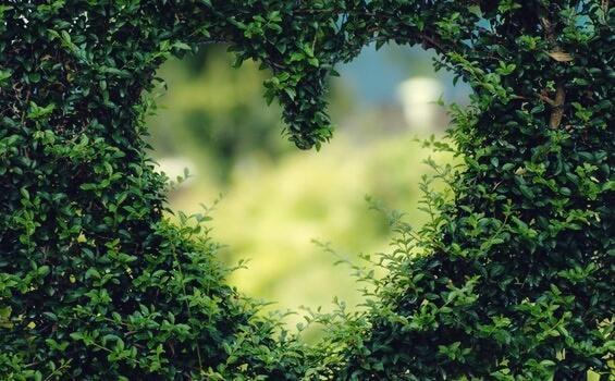 sydämenmuotoinen aukko puskassa