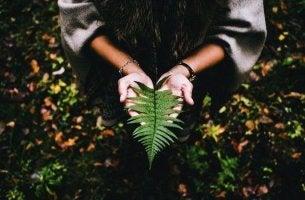 elämän tarkoituksen löytäminen metsän hiljaisuudesta