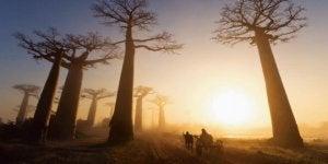 puut polun vierellä