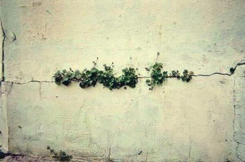 voimme päästä yli mistä tahansa: myös kasvit kasvavat betonissa