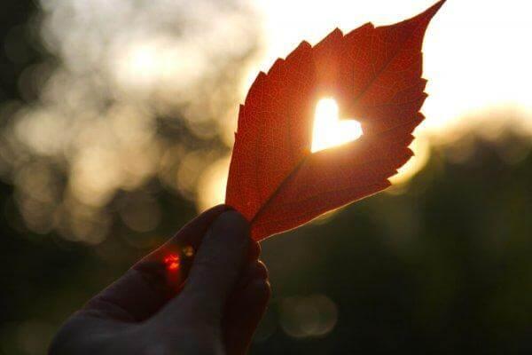 puun lehdessä on sydämenmuotoinen reikä