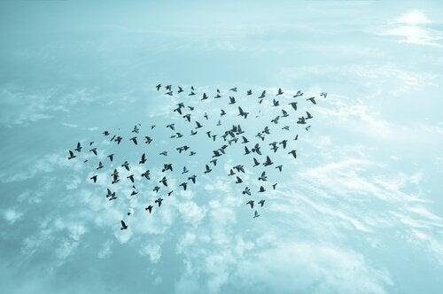 linnut muodostavat nuolen