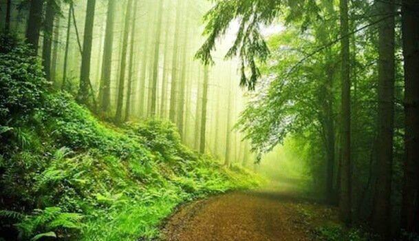 kaunis metsäpolku