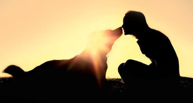 koiran kanssa on kivaa - mutta miten selvitä lemmikkieläimen kuolemasta