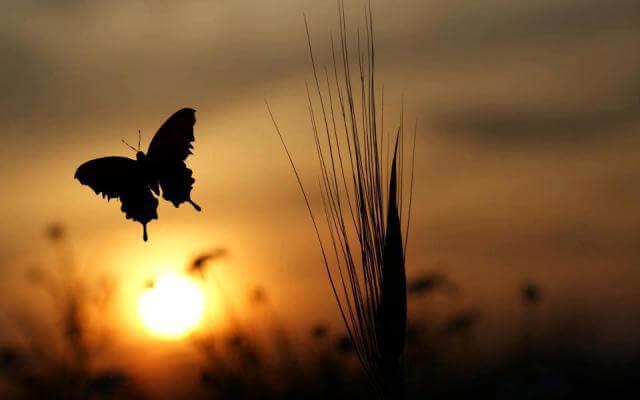 perhonen ja aurinko
