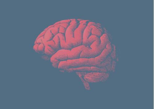 Miksi aivot ikääntyvät? Vastaus löytyy geeneistä
