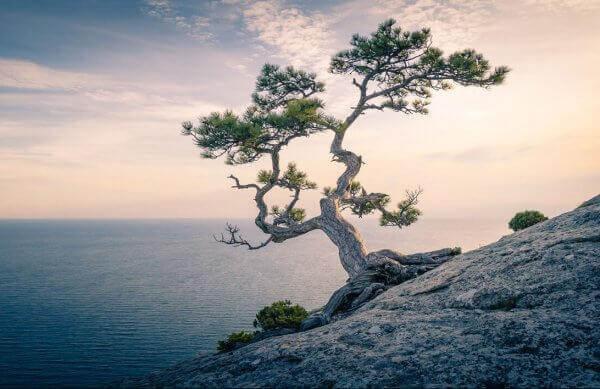 yksinäinen puu kalliolla