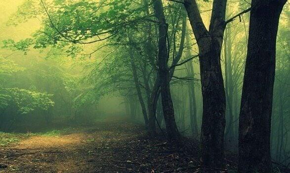 hämyinen metsä: metsätesti