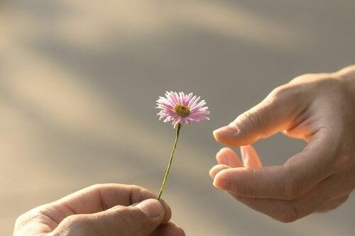 täydellinen anteeksianto ja kukka toisen käteen
