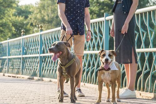 mies, nainen ja koirat