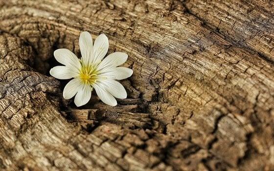 kukka kasvaa puun rakosessa