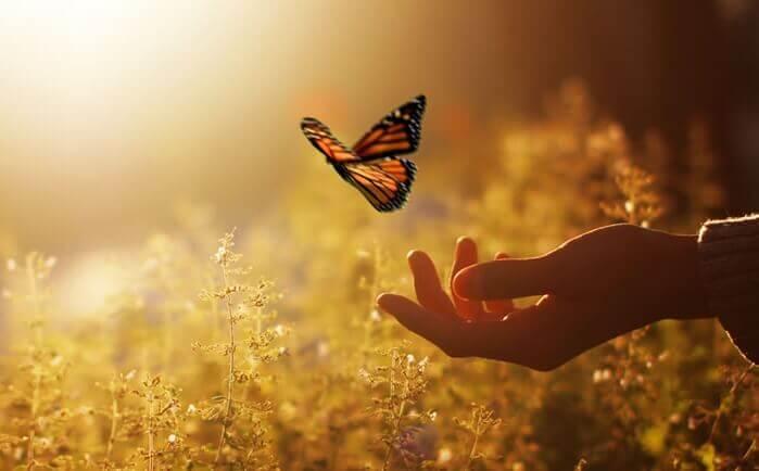perhonen ja käsi