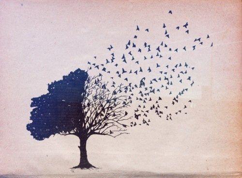 linnut tuhosivat puolet puusta