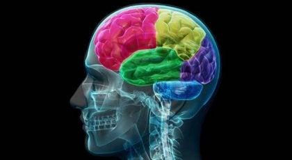 Addiktin aivot: pakkomielteen ja tarpeen anatomia