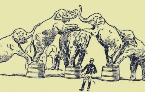 elefantit sirkuksessa