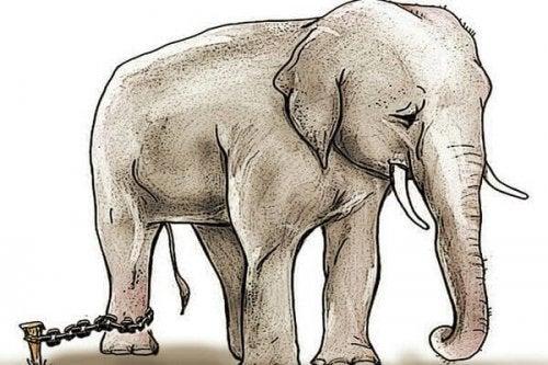 kahlittu elefantti