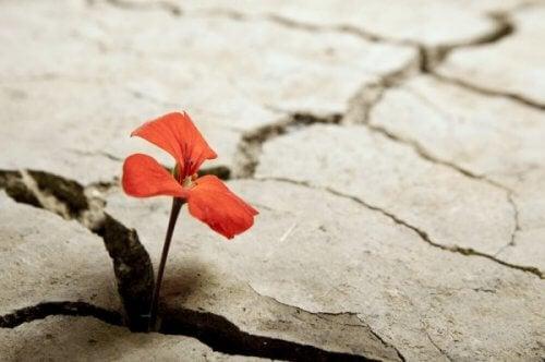 kukka kasvaa kuivan maan rakosesta