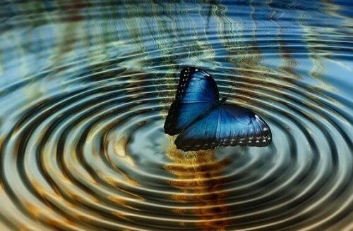 """Kaaosteoria tai """"perhosvaikutus"""""""