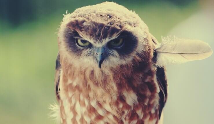 huono tapa loukkaantua kaikesta: pöllön sulka on vinossa