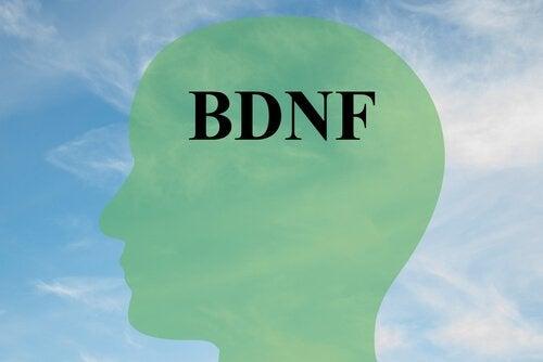 Miten lisätä BDNF:ää, keskeistä proteiinia, terveille aivosoluille
