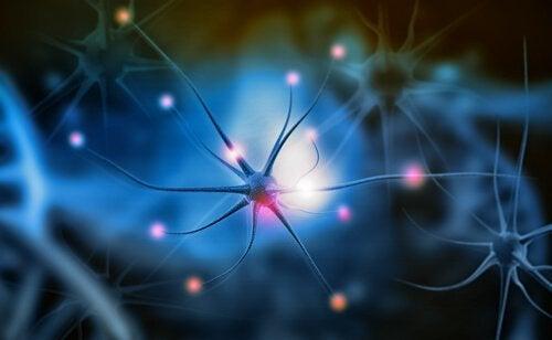 Neurogeneesi ja sen merkitys