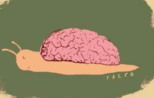 etanan kotelo on aivot