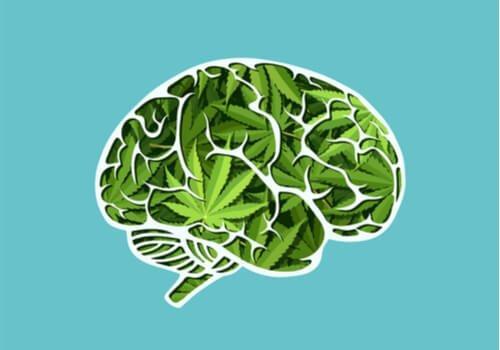 Kannabiksen pitkäkestoisen käytön vaikutukset aivoihin