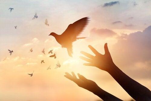 kädet päästävät linnun vapaaksi