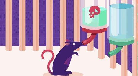 rotta juo vettä, johon on sekoitettu huumetta