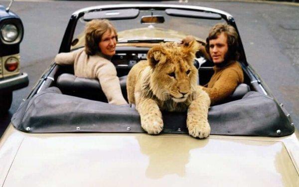 christian-leijona autossa