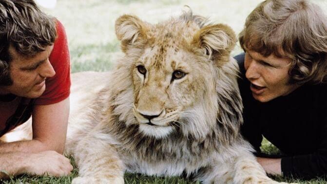Leijona nimeltä Christian - sydäntä lämmittävä tarina