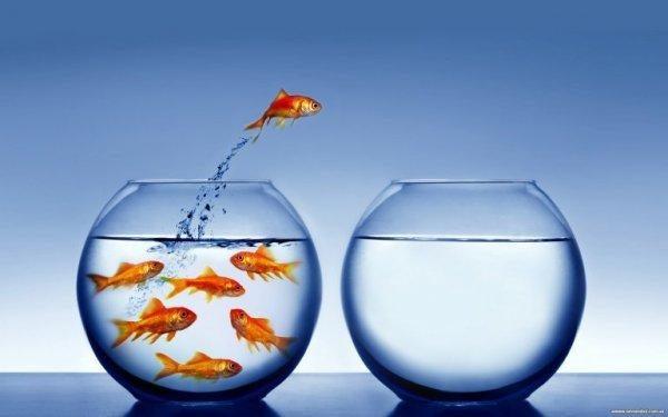 yksi kala hyppää toiseen altaaseen