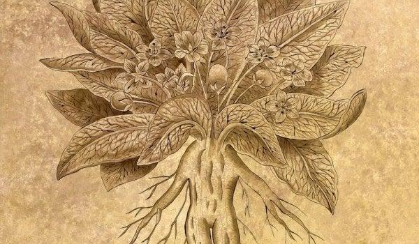 skopolamiini -kasvi