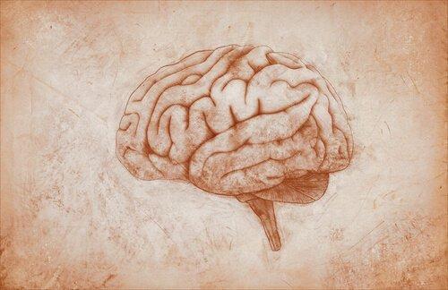 aivot piirrettyinä