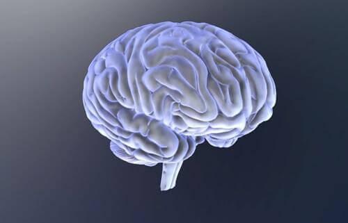 autismikirjosta kärsivien aivot