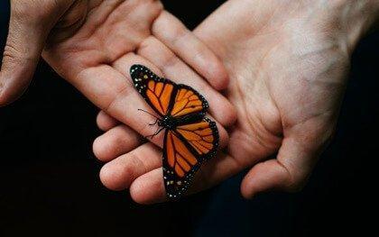 perhonen käsissä