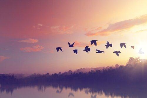 lintuparvi lentää