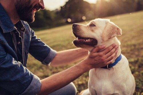 Historiaa tehneet tarinat koirista